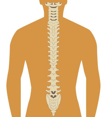 spine pain: silueta humana con la ilustraci�n de la columna vertebral