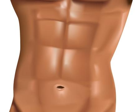 muskelaufbau: realistische m�nnlich Bauchmuskeln auf wei�em Hintergrund