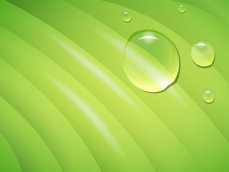 leaf closeup with rain drops, transparency and gradient mesh used Stock Vector - 13079658