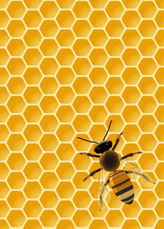 wax glossy: be on seamless honeycomb, transparency used