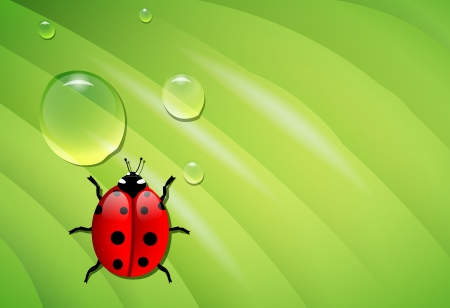 vector ladybug on wet green leaf, eps10 vector, transparency and gradient mesh used Vector