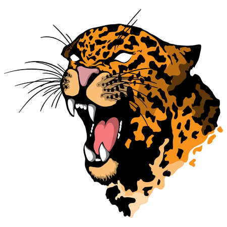 Isolated illustration of a leopard head isolated on white background. Illustration