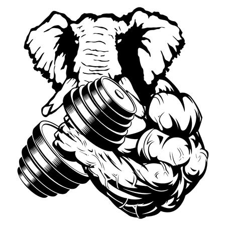 Fuerte elefante el atleta realiza el ejercicio de bíceps con mancuernas Ilustración de vector