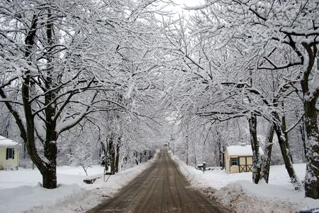 unpaved road: Unpaved road going to horizon among trees under snow
