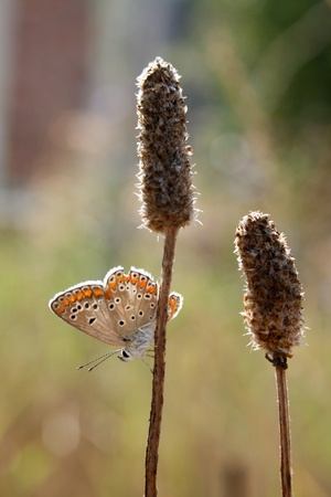 Colorful butterfly on a dry herb