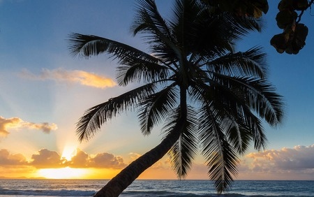 Sunset, paradise beach and palm tree, Martinique island.