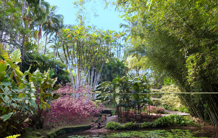The garden of Balata, Martinique island, French West Indies. Stock Photo