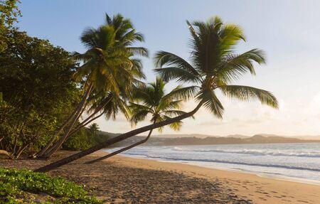 The Caribbean beach , Martinique island.