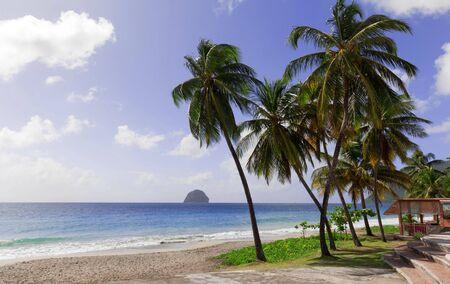 The palm trees on Caribbean beach, Martinique island.