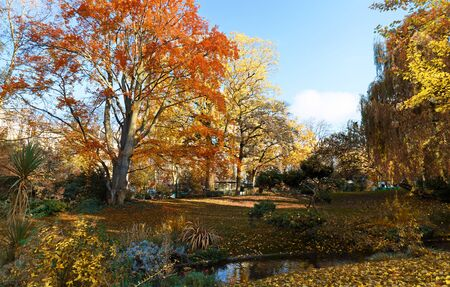 multi colour trees in the autumn forest 版權商用圖片