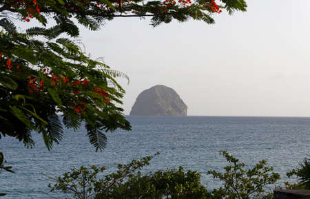 The Flamboyant tree in the foreground and Diamond rock and blue sea in the background . Martinique island. Zdjęcie Seryjne