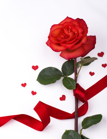 Rose for Valentines Day card Stock Photo