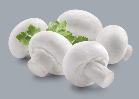 champignon: Mushroom champignon group and parsley isolated Stock Photo
