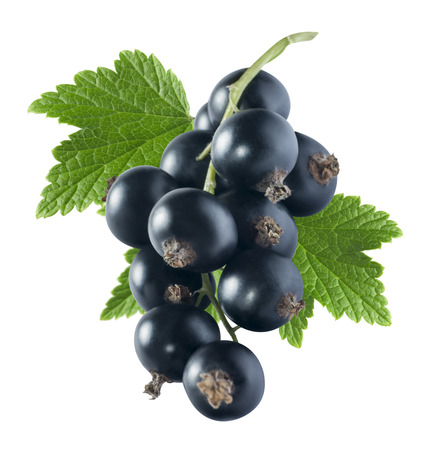Black currant 2 with leaf isolated on white background as package design element 写真素材