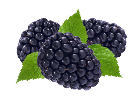 brambleberry: Three blackberries and leaves isolated on white background as package design element Stock Photo