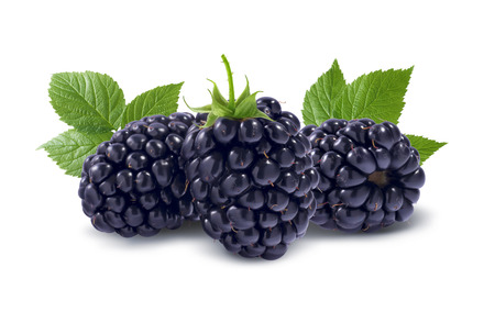 Line of three black raspberries isolated on white background as package design element