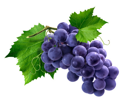 Purple Isabella grapes bunch isolated on white background as package design element Foto de archivo