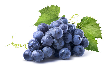 grape fruit: Blue wet Isabella grapes bunch isolated on white background as package design element