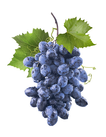 Big wet blue grapes bunch and leaves isolated on white background as package design element