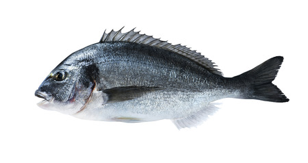 新鮮な魚料理雑誌やレシピの塩でブラック ボードにドラド鯛 写真素材