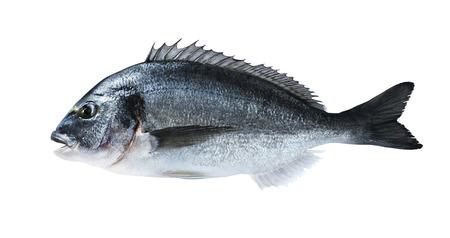 El pescado fresco dorado besugo a bordo negro con sal para revistas y recetas de cocina Foto de archivo - 36231557