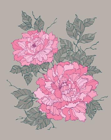 Pivoine rose fleur rose sur fond gris illustration vectorielle pour la décoration et le design Banque d'images - 36662701