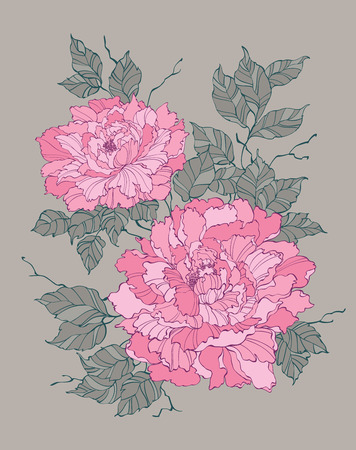 Pink peony rose flower on grey background vector illustration for decoration and design