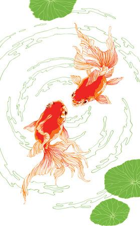Dos chinos rojos peces dorados sobre fondo blanco vector verticales para la decoración Foto de archivo - 36959948