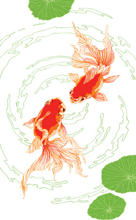 golden fish: Two chinese red golden fish on white background vector vertical for decoration