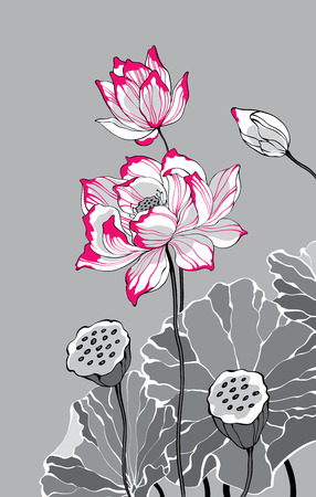 Two red white lotus on grey background for decoration and design Ilustracja