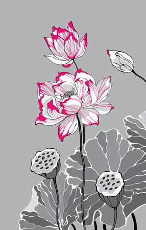 Zwei rote weißen Lotus auf grauem Hintergrund für Dekoration und Design Standard-Bild - 36960013