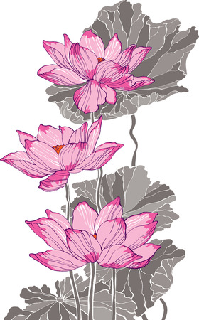 illustration technique: Three pink grey lotus drawing for decoration and design
