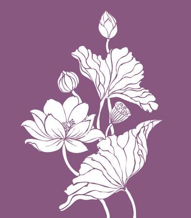 flor violeta: Loto blanco en la ilustraci�n de fondo de color p�rpura para la decoraci�n Vectores