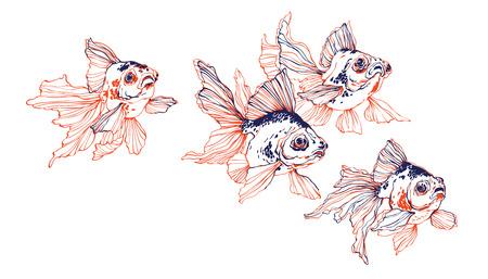 흰색 배경에 중국 투명 황금 물고기의 학교 벡터 장식 일러스트