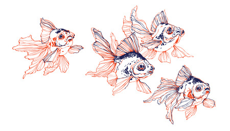 School of chinese transparent golden fish on white background vector for decoration