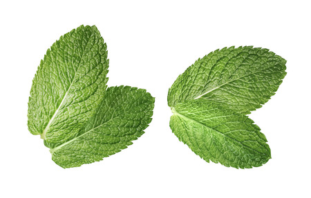 2 double mint leaves composition isolated on white background as package design element