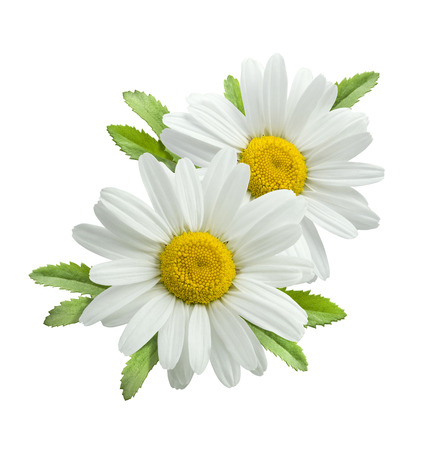 Double vertical chamomile composition isolated on white background as package design element
