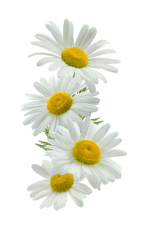 Vertical chamomile composition isolated on white background as package design element