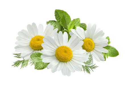 Kamille bloem muntblaadjes samenstelling geïsoleerd op een witte achtergrond als pakket ontwerpelement Stockfoto