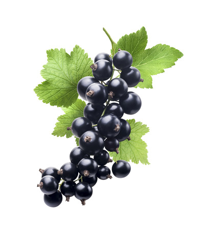 black currant: Black currant new isolated on white background as package design element