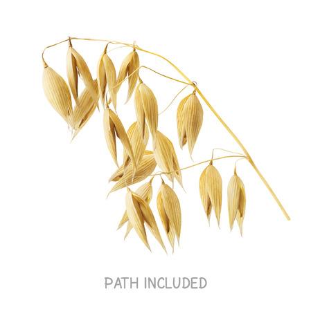 avena: Ruta cabeza de avena Amarillo incluido aislado sobre fondo blanco como elemento de diseño de paquete Foto de archivo