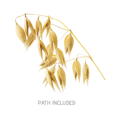 oats: Yellow oat head path included isolated on white background as package design element