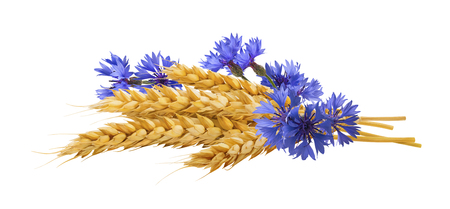 Horizontal wheat blue cornflower composition isolated on white background as package design element