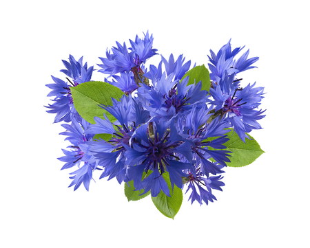 bluet: Square blue cornflower composition isolated on white background as package design element