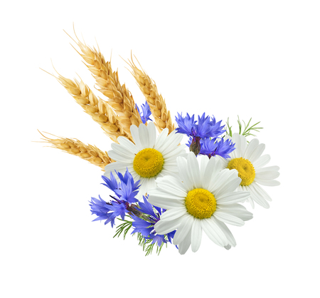 bluet: Wheat blue cornflower chamomile composition isolated on white background as package design element