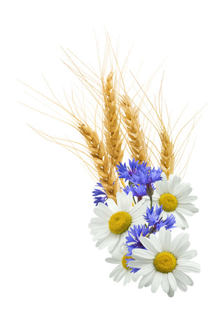 bluet: Wheat, cornflower, chamomile flower composition isolated on white background as package design element
