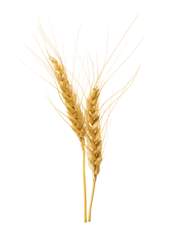 Double wheat ears isolated on white background as package design element