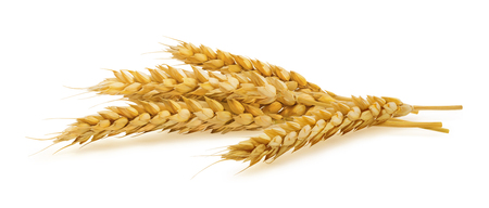 isolated on yellow: Horizontal wheat ears isolated on white background as package design element
