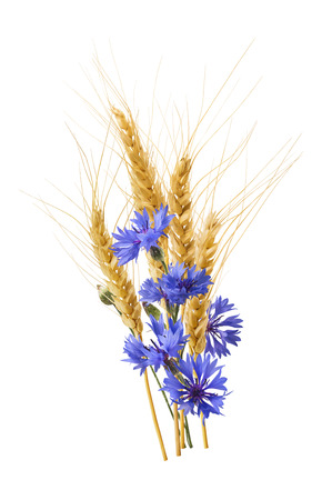 bluet: Wheat blue corn flower vertical isolated on white background as package design element Stock Photo