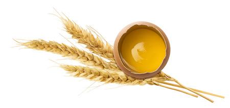 yolk: Fresh egg yolk wheat ear isolated on white background as package design element